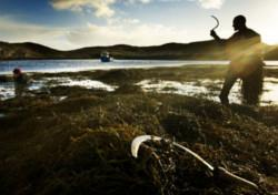 Turning the tide on seaweed supplements