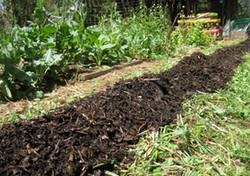 Organic by-product derived biochar, a greener option
